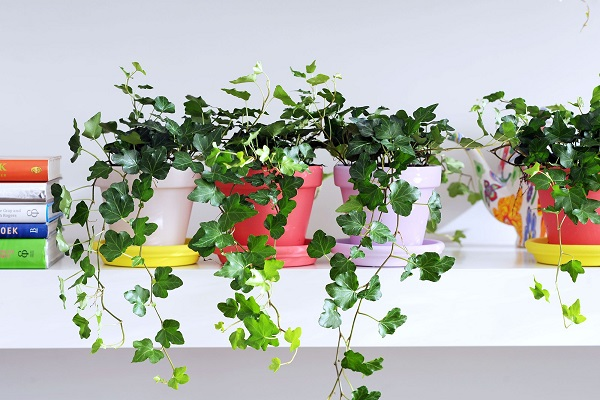 چه گیاهانی را در اتاق مان بگذاریم؟
