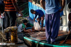 فروش «میگو» در اسکلههای بوشهر