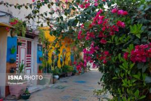 بوشهر؛ کوچههای آشتیکنان