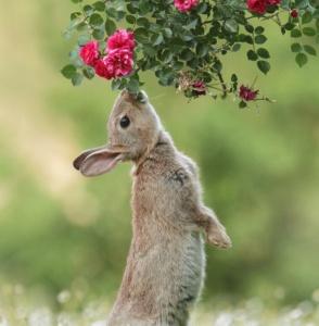 عکس های زیبا از جوندگان کوچک